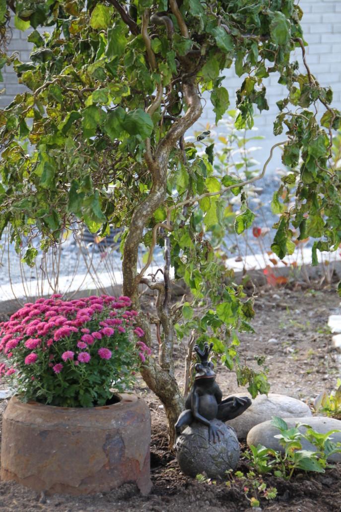 Corylus avellana contorta Vrihassel veks seint, men er ei super-spennade busk å ha i hagen. Greinene er som små kunstverk og kan anten nyttast aleine eller for å skape kontrastar og volum i blomsterarrangement. Meir om dette i seinare blogg-innlegg.